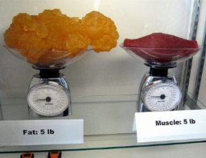 The big difference between fat and muscle.